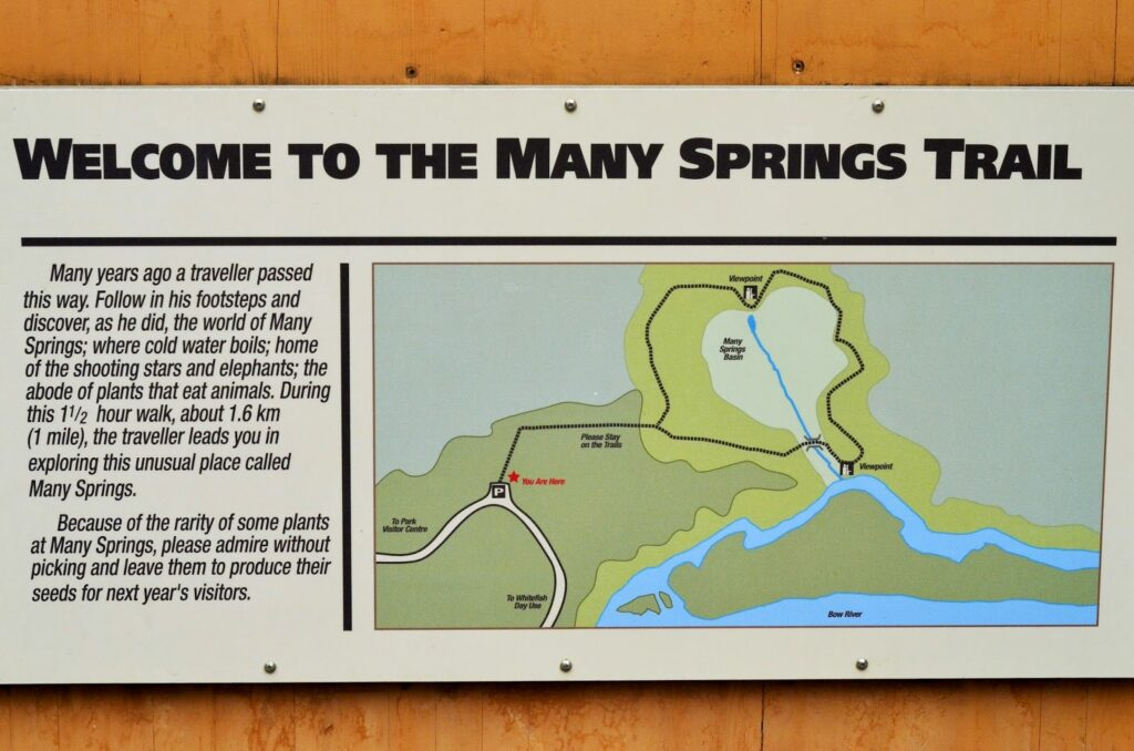 many-springs-trail-bow-valley-provincial-park