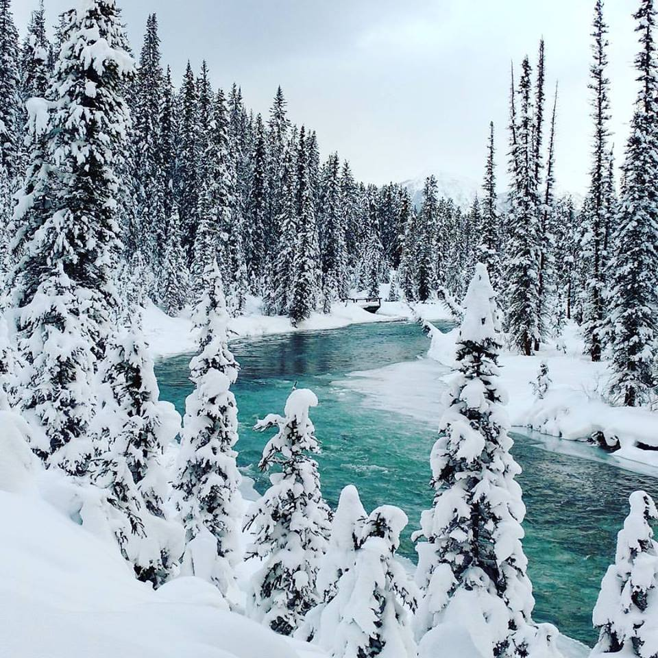 Bow River Loop, Lake Louise