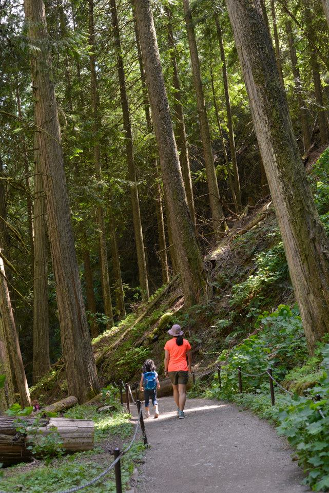 Margaret Falls Trail, Herald Provincial Park