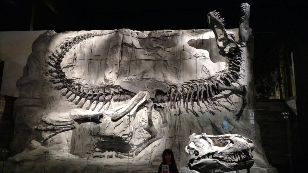 Royal Tyrrell Museum Exhibit