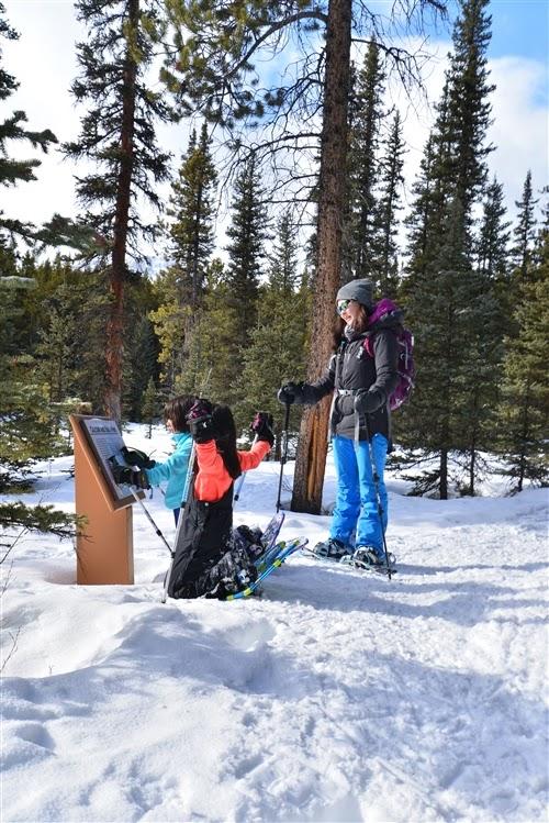 Elkwood Loop Snowshoe Trail