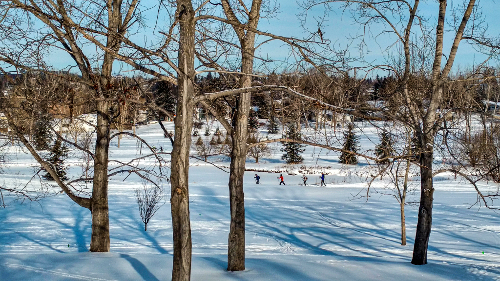 Cross country skiing at Confederation Park Golf Course, Calgary