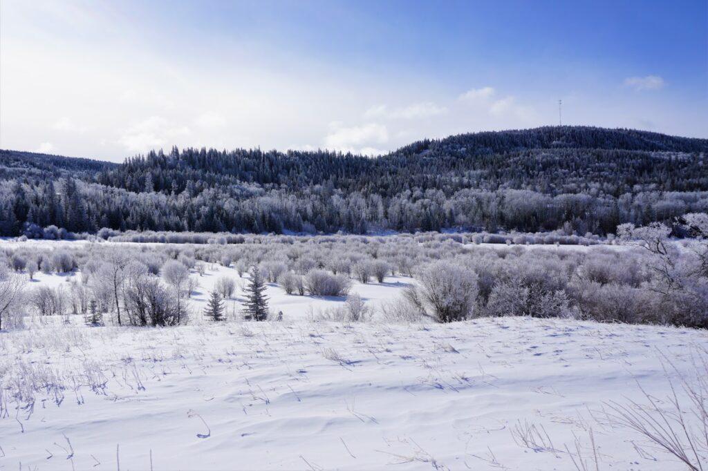cypress-hills-provincial-park-winter