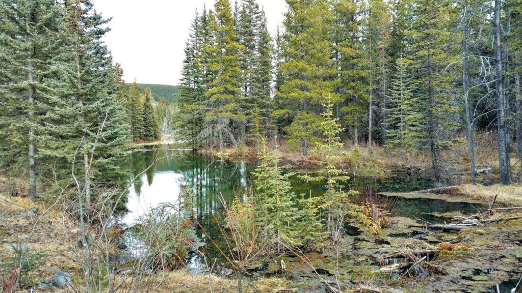 Beaver-Dam-Interpretive-Trail.jpg