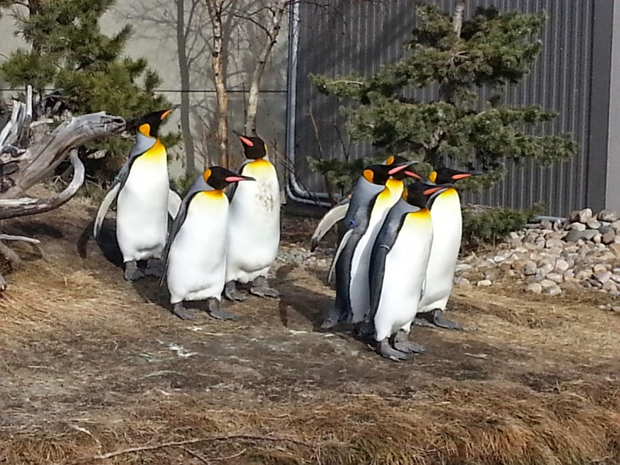 Penguins at The Calgary Zoo