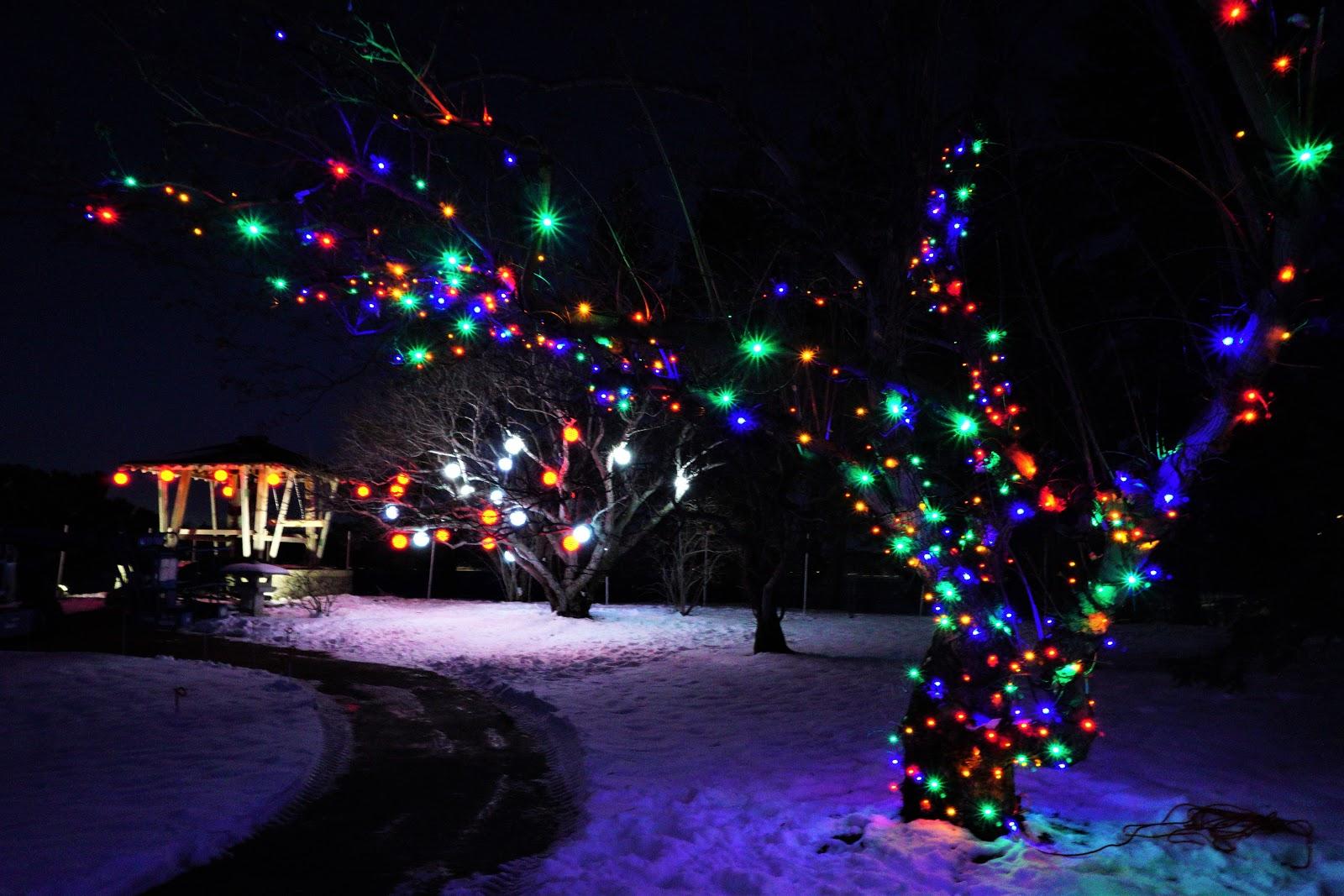 Winter Lights Festival at Nikka Yuko Japanese Garden, Lethbridge