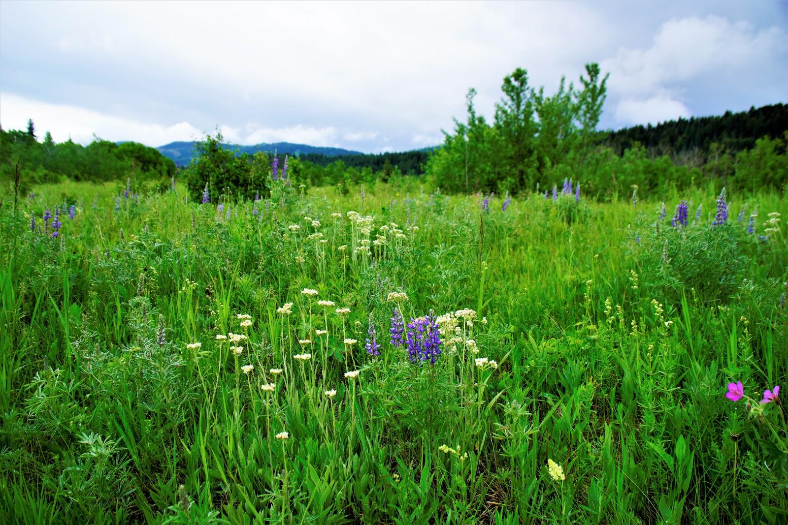 Wildflowers at Beauvais Lake Provincial Park