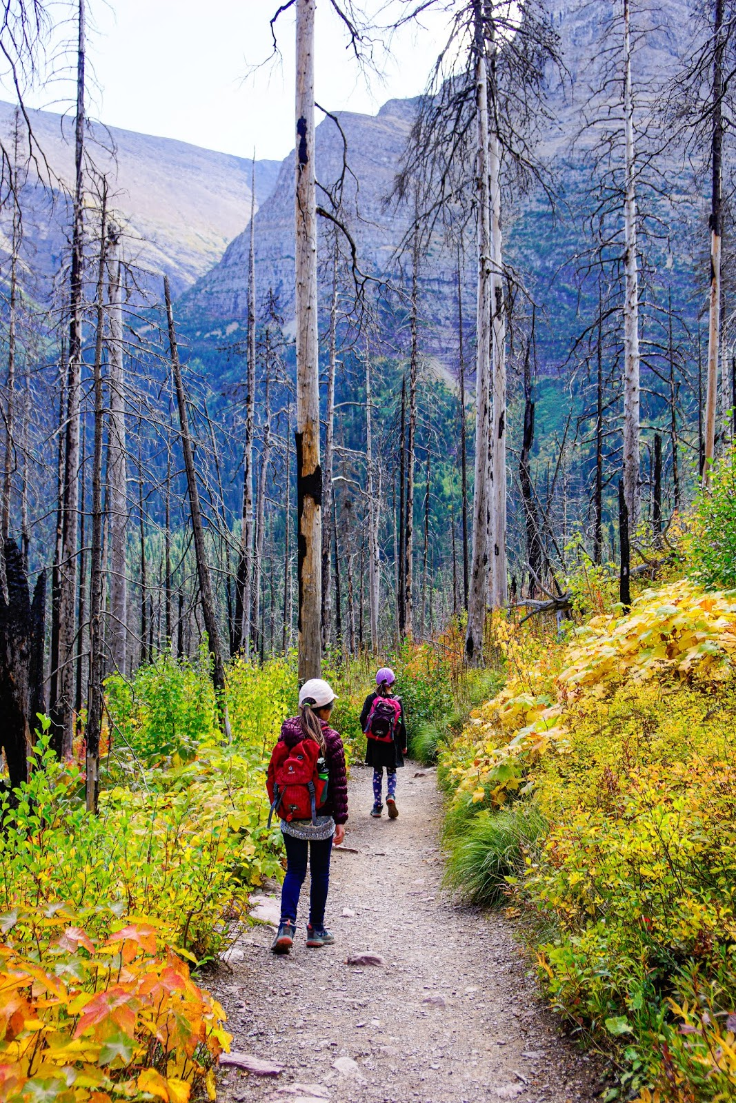 St. Mary Falls Trail, Glacier National Park