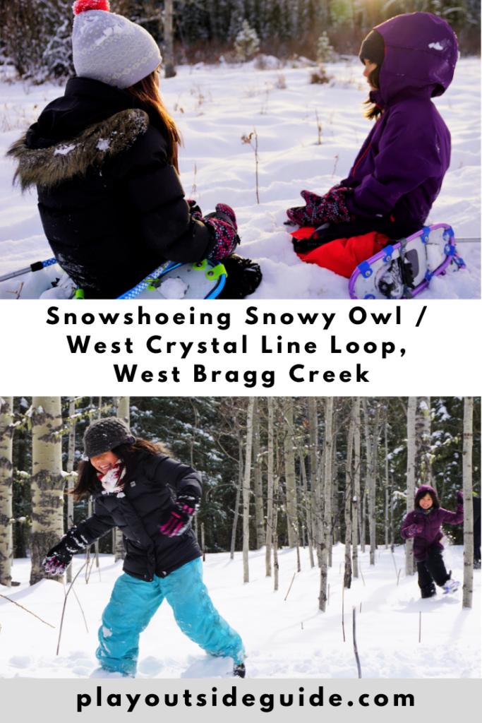 snowshoeing snowy owl west crystal line loop, west bragg creek