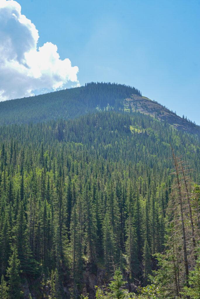 mount-hoffman-elbow-sheep-wildland