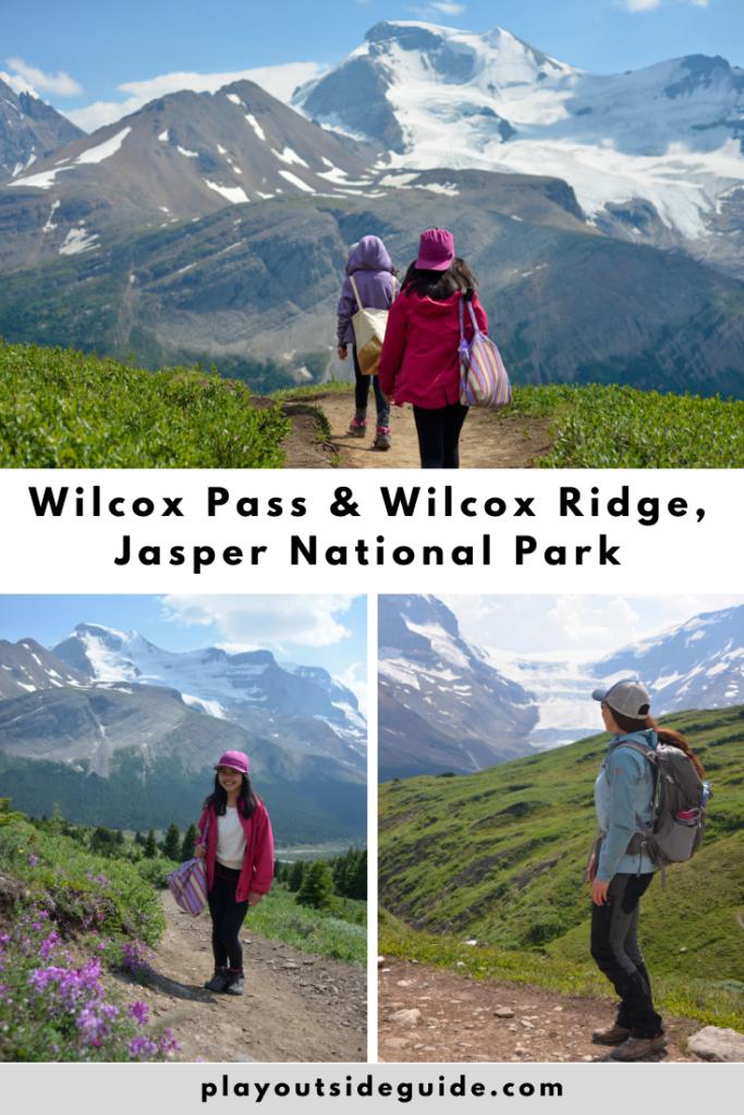 wilcox-pass-wilcox-ridge-jasper-national-park