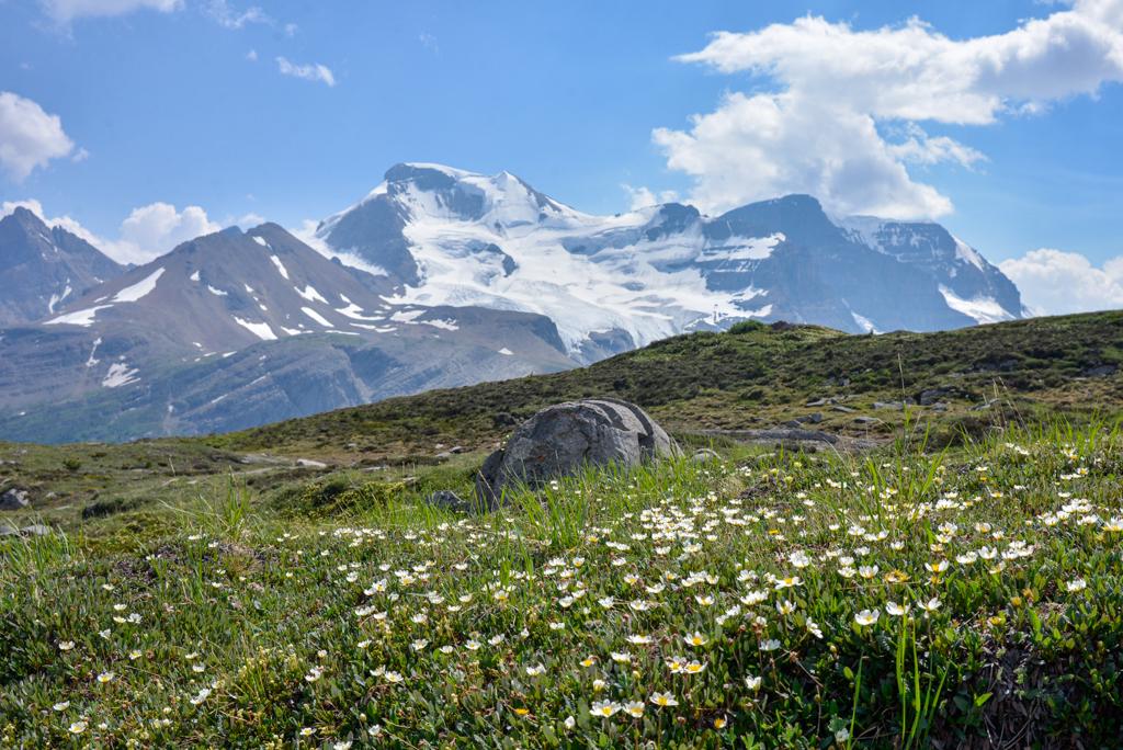wilcox-pass-jasper-national-park-06