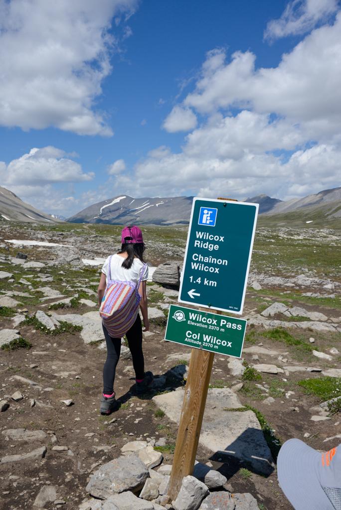 wilcox-pass-jasper-national-park-13