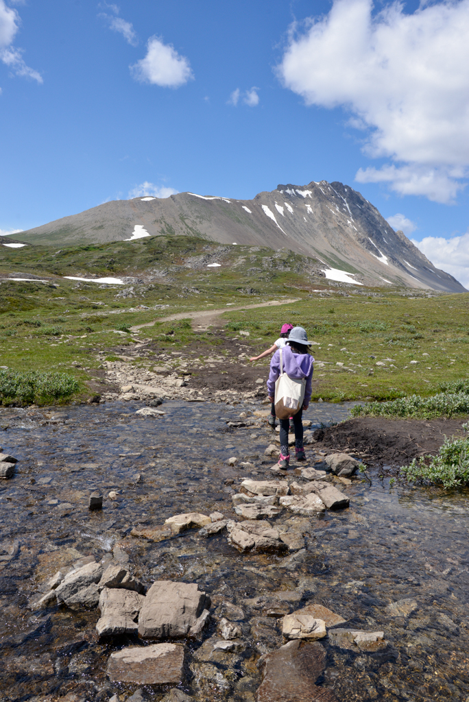 wilcox-pass-jasper-national-park-14