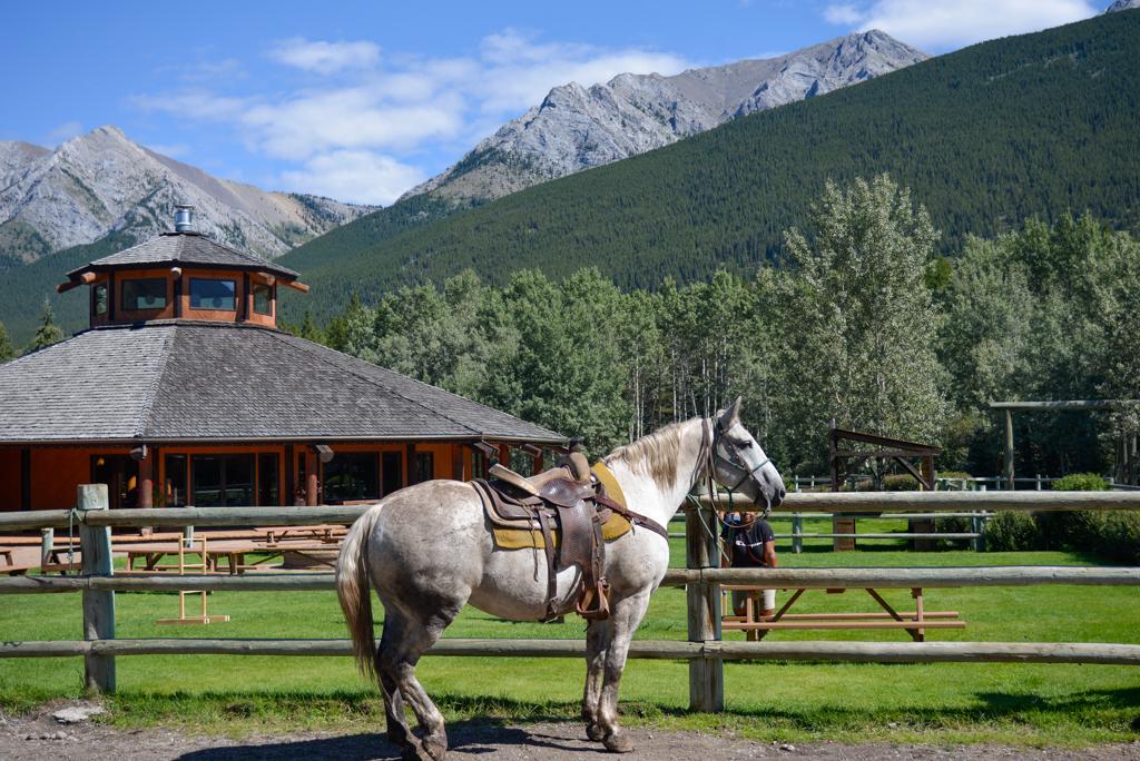 boundary-ranch-vista-trail-ride-kananaskis-01