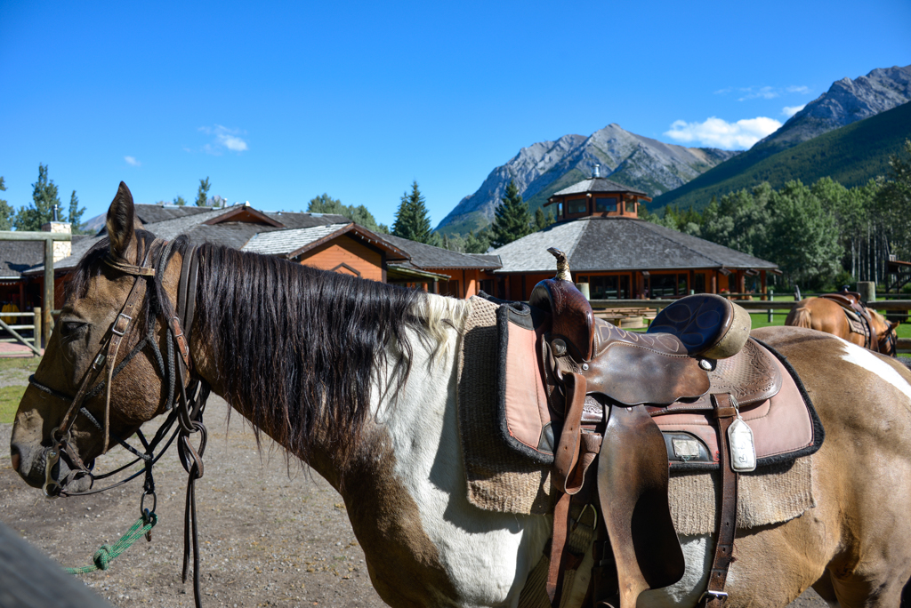 boundary-ranch-vista-trail-ride-kananaskis-12