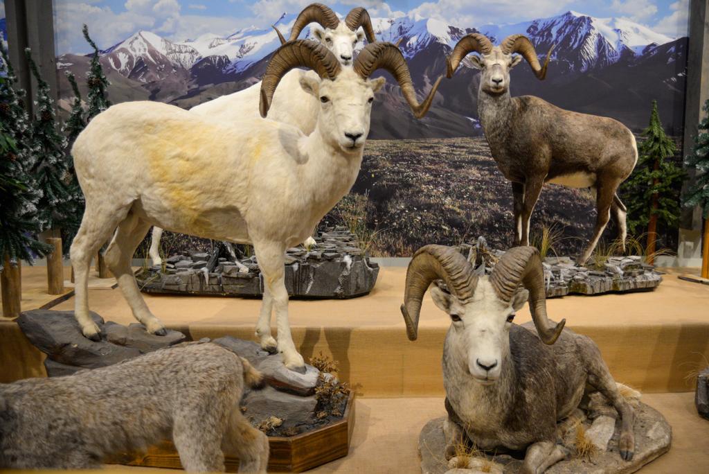 guinn-family-wildlife-museum-boundary-ranch-kananaskis 2