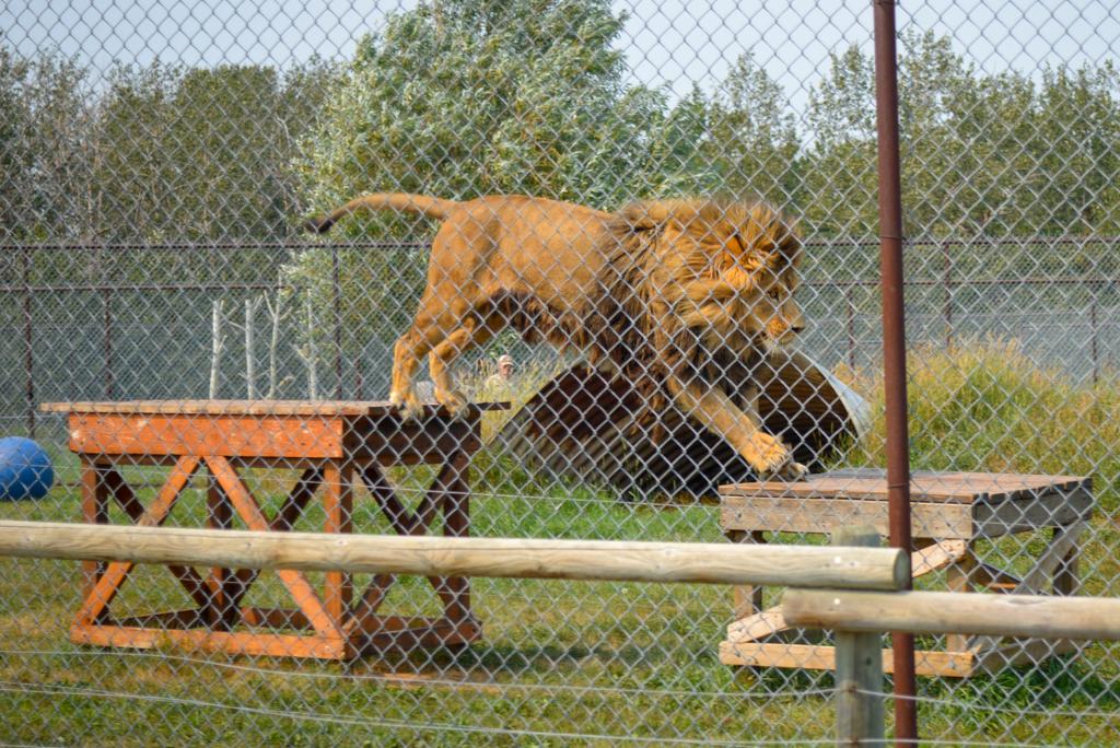 discovery-wildlife-park-innisfail-rsz-19