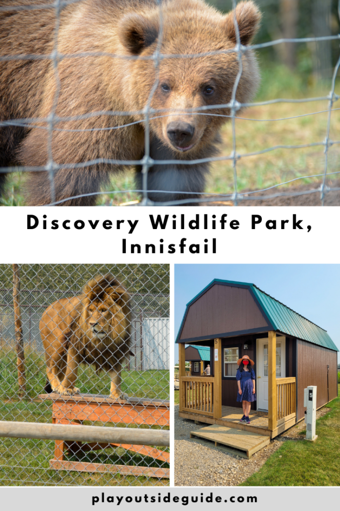 make-memories-at-discovery-wildlife-park-innisfail