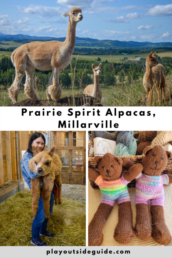 Prairie Spirit Alpaca Farm, Millarville