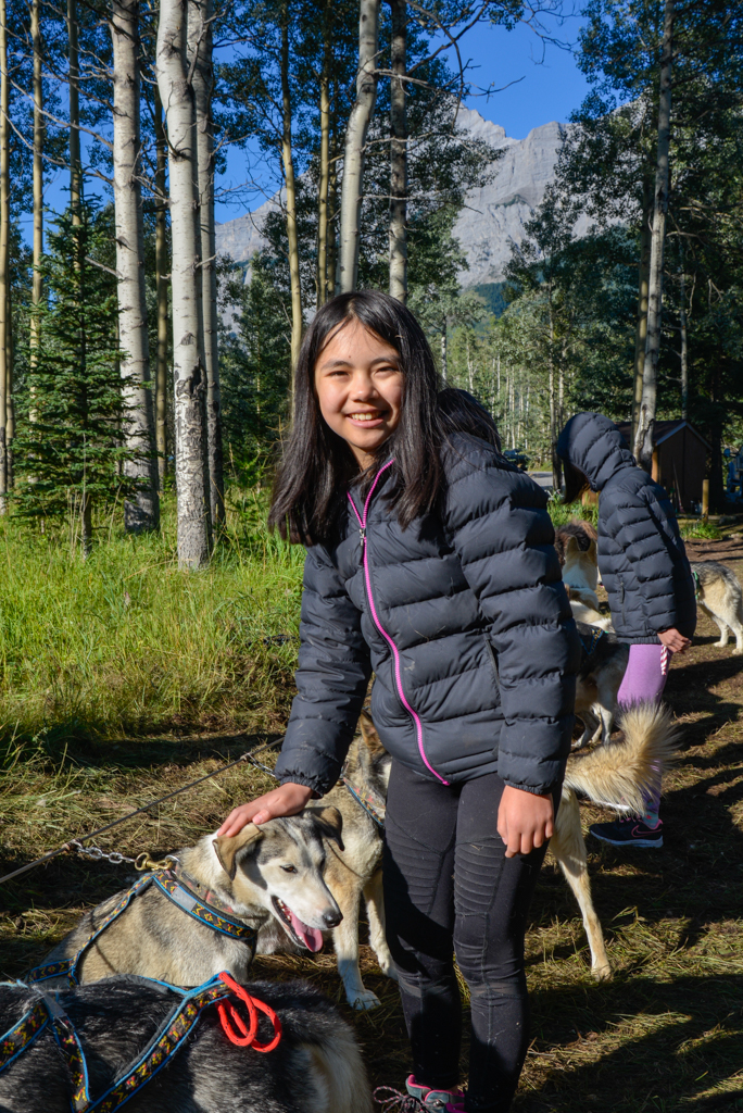 snowy-owl-sled-dogs-summer-dog-carting-03