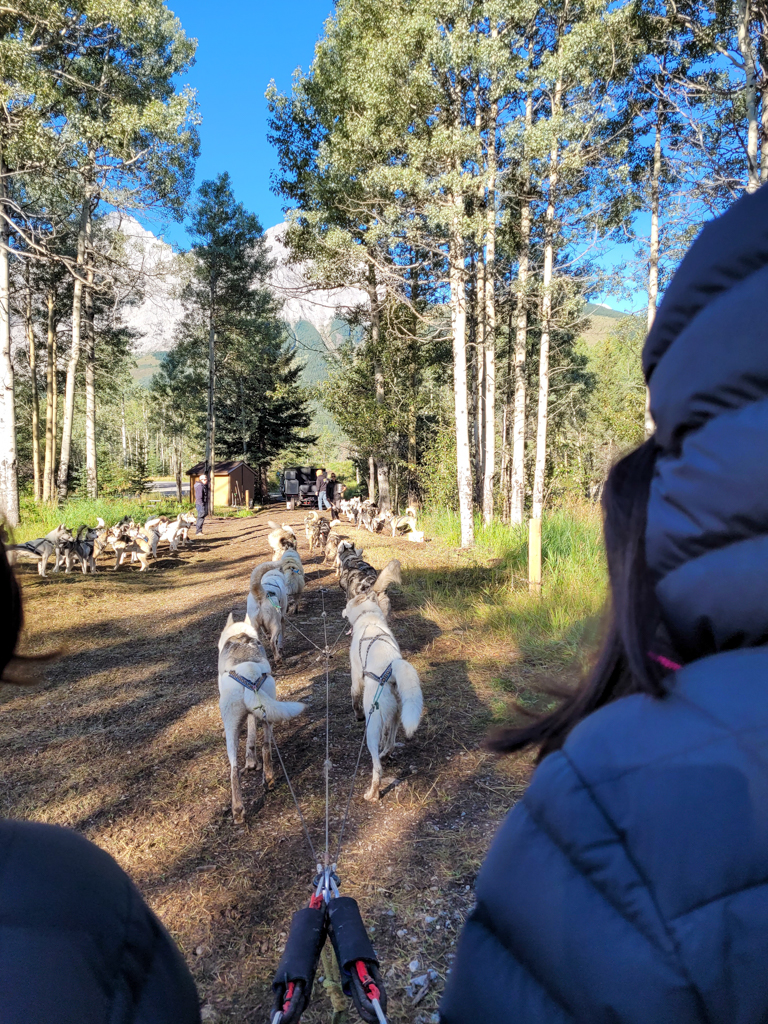 snowy-owl-sled-dogs-summer-dog-carting-14