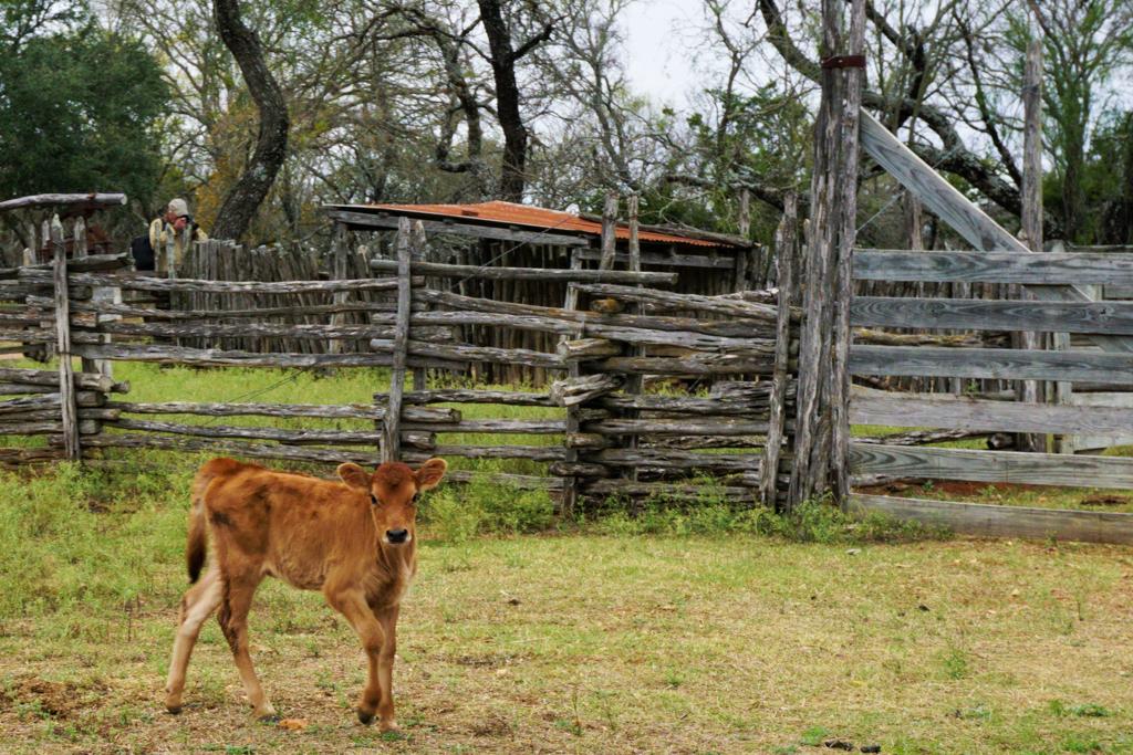 sauer-beckmann-living-history-farmstead-fredericksburg-texas-rsz-18